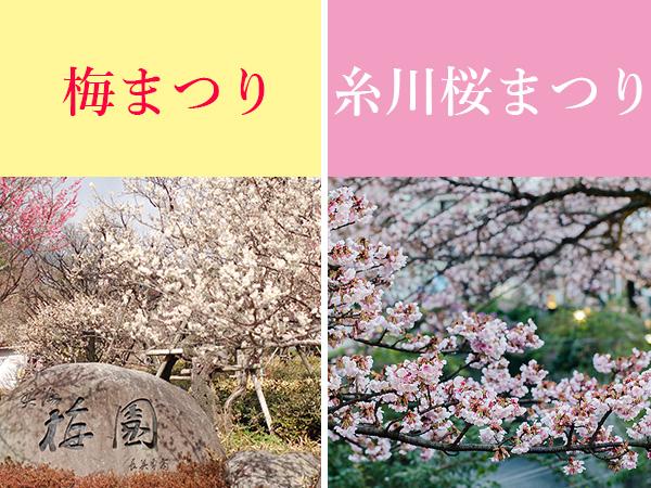 熱海梅園 梅まつり/糸川 桜まつり
