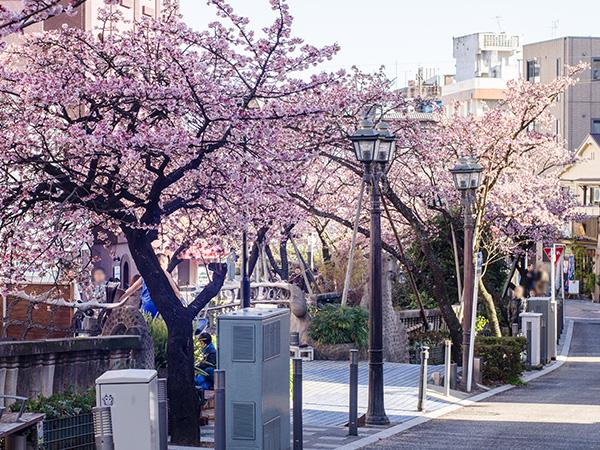 あたみ桜まつり