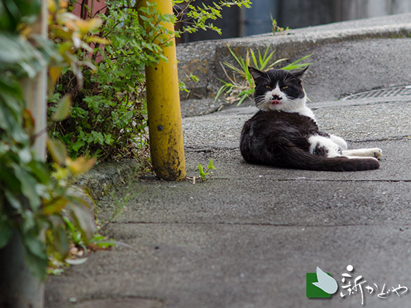 伊豆山路地 猫